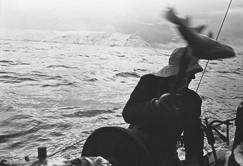 solon med torsk